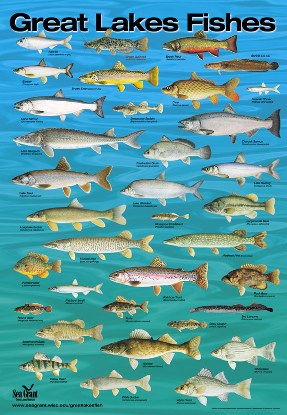 great lakes fish